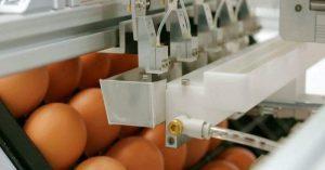 eggs in hatchery
