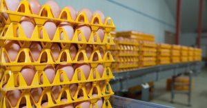 eggs on a tray in a farm