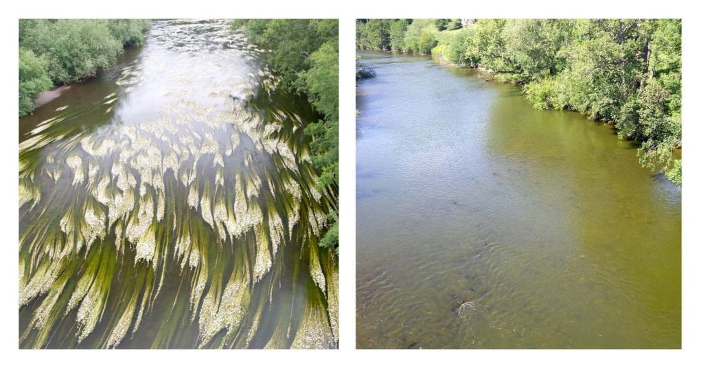 image displays Wye with and without an algal bloom