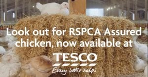 Screenshot of the new advert from RSPCA