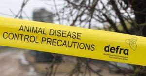 An avian influenza outbreak