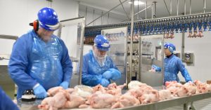 workers cut chicken