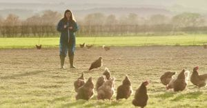 Free range hens being assessed by a waitrose employee