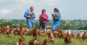 Adam & Polly with laying hens