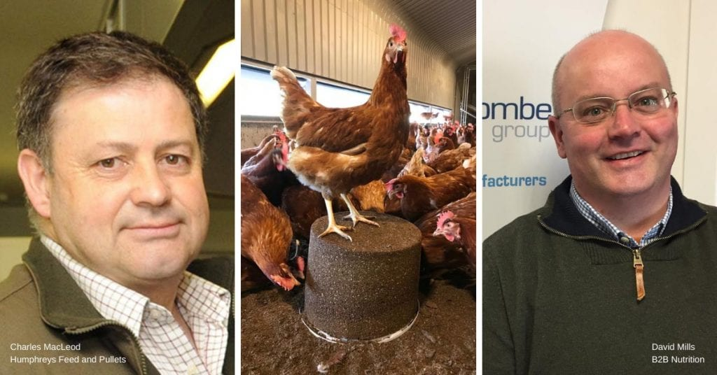 A montage of Charles MacLeod, A hen, and David Mills