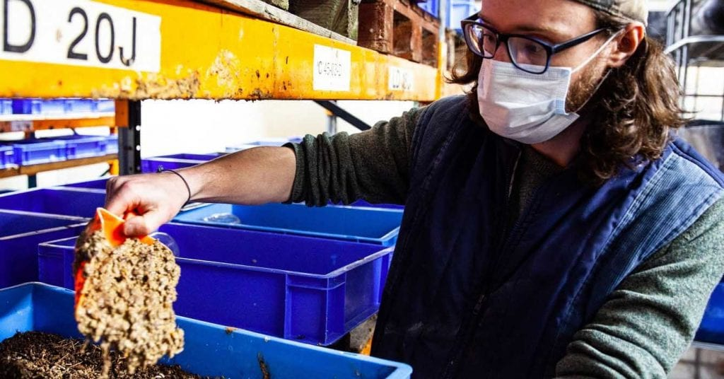 joe halsted managing director of agrigrub feeds with insect meal